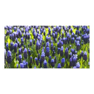 Grape hyacinth fields personalized photo card