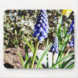 Grape Hyacinth Flower Mousepad