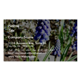 Grape Hyacinth Flower Pack Of Standard Business Cards