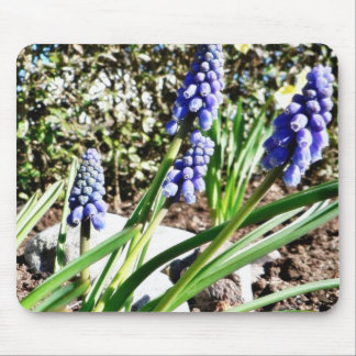 Grape Hyacinth Flowers Mousepad