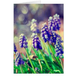 Grape Hyacinth greetings'cards . Card