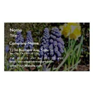 Grape Hyacinth Pack Of Standard Business Cards