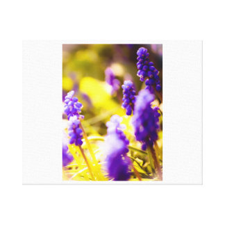 Grape Hyacinth Water Colour Canvas Print