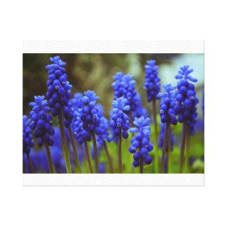 Grape Hyacinths Gallery Wrap Canvas