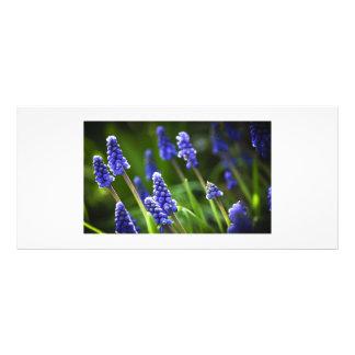 Grape Hyacinths Custom Rack Cards
