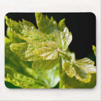 Grape Leaves Mouse Pad