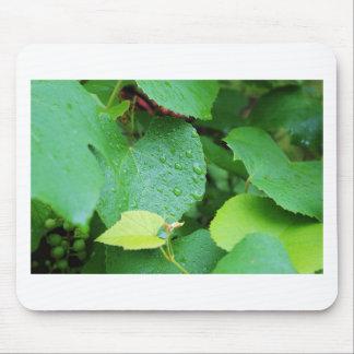 Grape Vine Mouse Pad