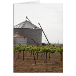 Grape Vines Growing at McConnell Estates Winery Note Card
