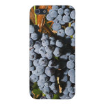 Grape Vineyard 2 Case For iPhone 5