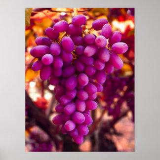 Grapes Cesar Chavez Symbol Print