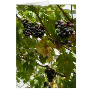 Grapes growing on a vine card