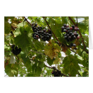 Grapes growing on a vine greeting card