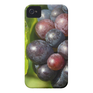Grapes on vine iPhone 4 cover