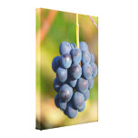 Grapes Stretched Canvas Prints
