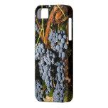 Grapes Vineyard 2 iPhone 5 Covers