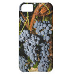Grapes Vineyard 2 iPhone 5C Case