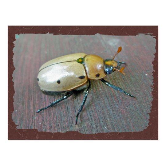 Grapevine Beetle (Pelidnota punctata) Series Postcard