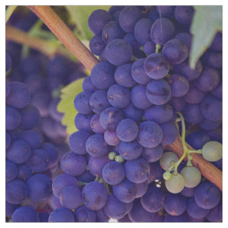 Grapevine Themed, Purple Grapes Grow On A Vine Wit Fabric