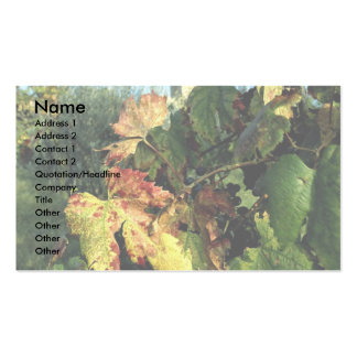 Grapevine, Tuscany, Italy Pack Of Standard Business Cards