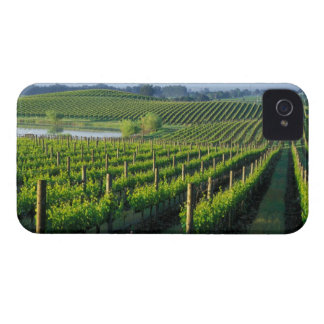 Grapevines in neat rows in California's Napa iPhone 4 Case
