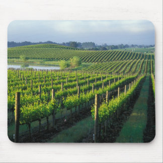 Grapevines in neat rows in California's Napa Mouse Pad