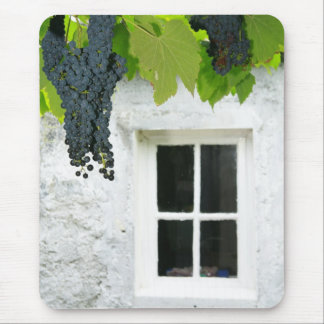 Grapevines Mouse Pad