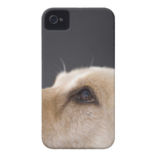 Graphic portrait of dog head, close-up iPhone 4 case