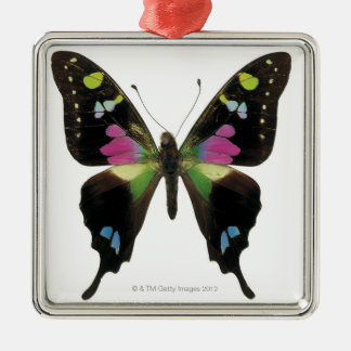 Graphium butterfly Silver-Colored square decoration