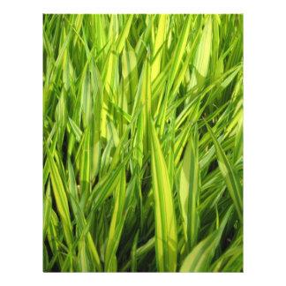 grass 21.5 cm x 28 cm flyer
