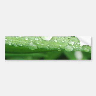 Grass and Rain Drops Bumper Sticker