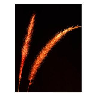 Grass Blades Postcard