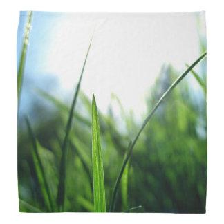 grass & blue sky bandana