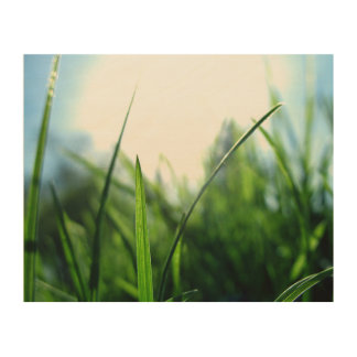 Grass & blue sky wood wall art