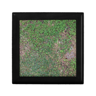 Grass, dirt, and dollar weed small square gift box