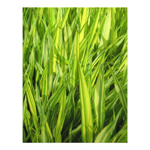 grass personalized flyer