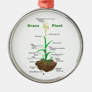 Grass Graminoids Plant Diagram Silver-Colored Round Decoration