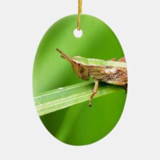 Grass Hopper on Leaf Christmas Ornaments