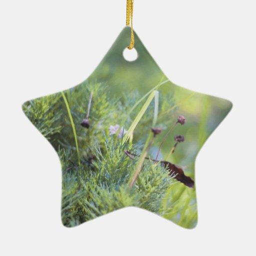 Grass Photography Christmas Ornament