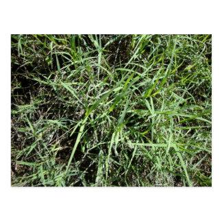 Grass Postcards