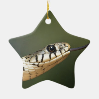 Grass Snake Christmas Ornament