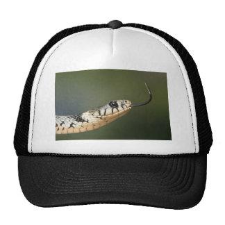 Grass Snake Trucker Hats
