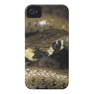 Grass snake iPhone 4 covers