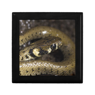 Grass snake small square gift box