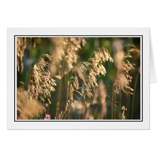Grasses Card