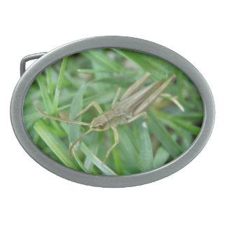 Grasshopper Belt Buckle