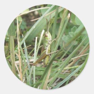 Grasshopper Camouflage Stickers