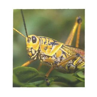 Grasshopper, Everglades National Park, Florida, Notepad