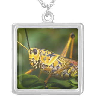 Grasshopper, Everglades National Park, Florida, Silver Plated Necklace