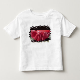 Grasshopper from Chapultepec, Mexico, c.1500 (carn Toddler T-Shirt