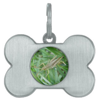 Grasshopper Pet Tag